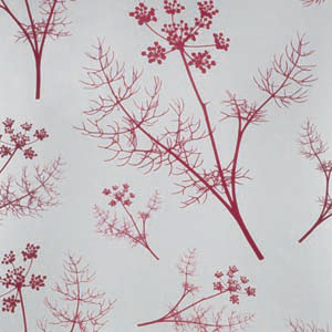 Red Fennel Wallpaper